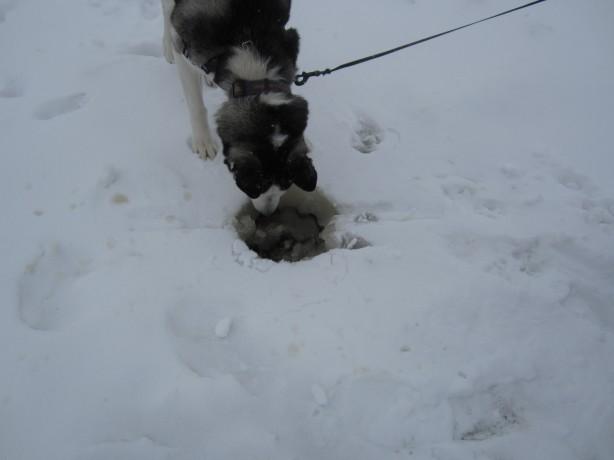 Radar ice fishing